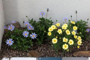 築80年の長屋を「碧の家 」に〈リノベーション〉‐13‐幸せの青い花