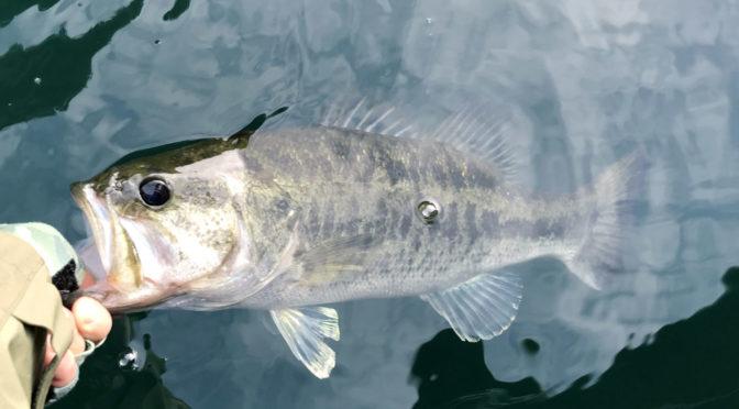 水張月は、魚もイチャイチャする季節‐1806‐